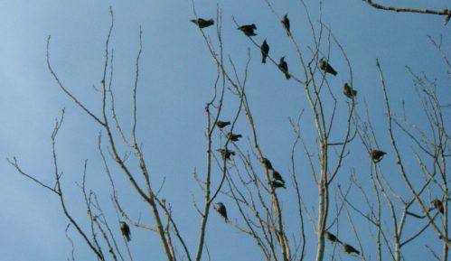 Ugrožene ptice na području bare Reve zbog odlaganja betonskog otpada 11