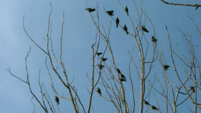 U SAD svake godine pri sudaru s zgradama ugine 600 miliona ptica 5