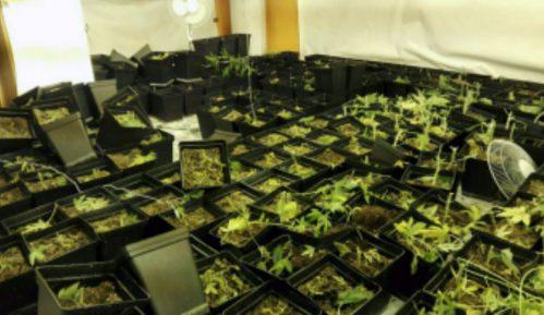 Zaplenjen ekstazi, spid i marihuana 9