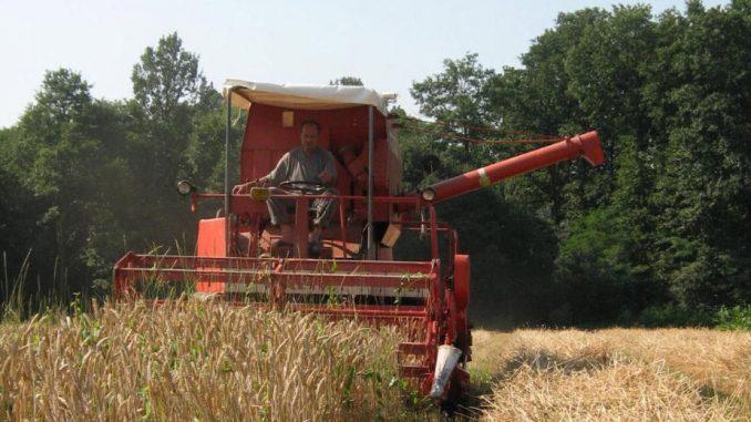 Za izvoz oko dva miliona tona hlebnog žita 1