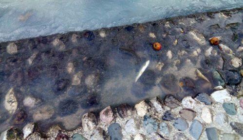 Titan-dioksid uzrok pomora ribe u Đetinji 6