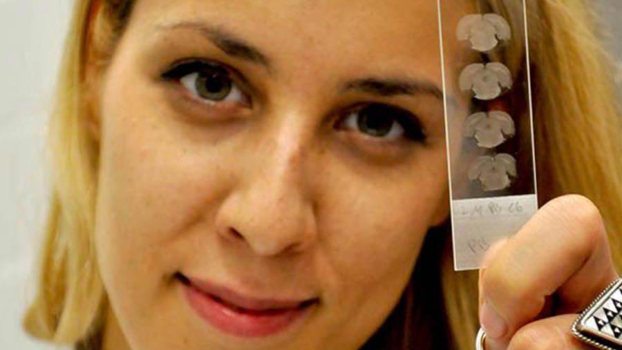 Marjana Brkić: Da li nervne ćelije imaju GPS? 1