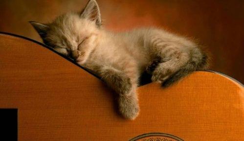 Muzika za mačke 3