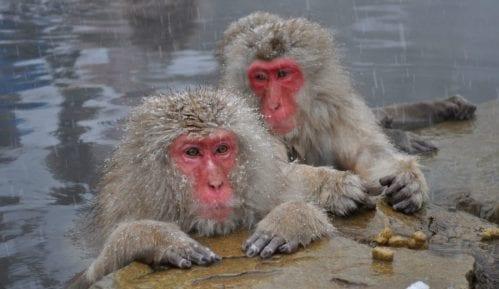 Inspekcija oduzela majmuna 13