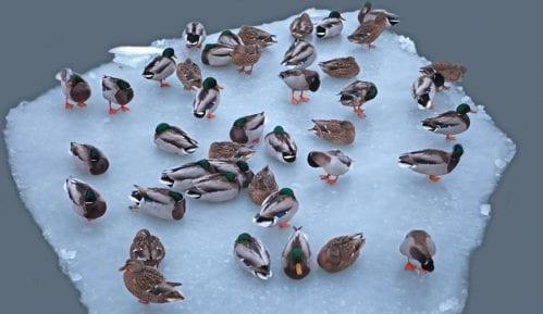 Spasavati i hraniti ptice 14
