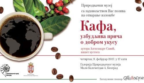 Kafa, uzbudljiva priča o dobrom ukusu 11