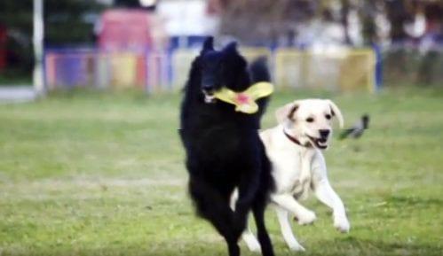 Pet friendly: Nagrade za prijatelje životinja (VIDEO) 4