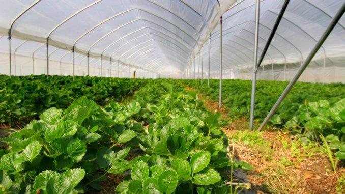 Konkurs za subvencije za poljoprivredu 1