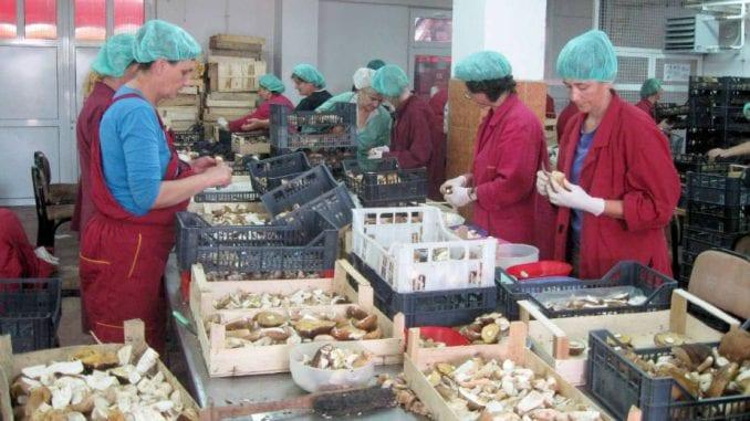 Oko 85 odsto mikro i malih preduzeća u Srbiji očekuje poslovne probleme 4