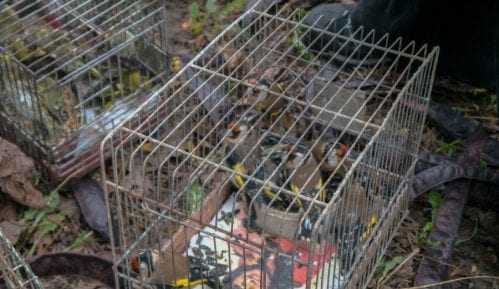 Divlje ptice pevačice na tezgama 12