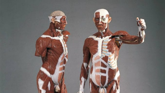 O pubertetu i zdravoj ishrani na časovima biologije 1