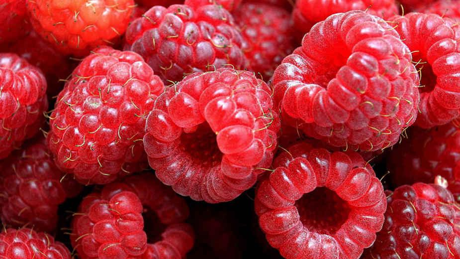 Nepravilnosti u otkupu voća 1