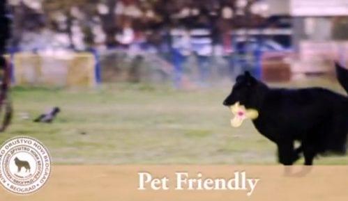 Pet Friendly: Besplatni sladoledi za kuce (VIDEO) 2