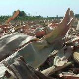 Biomasa umesto fosilnih goriva 3