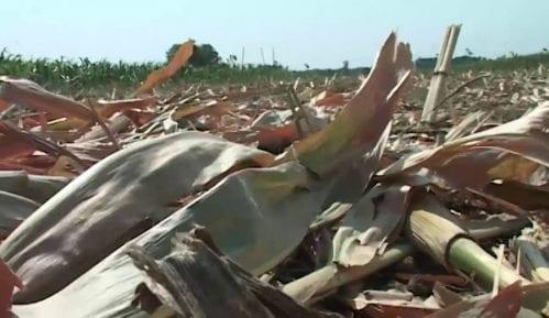 Biomasa umesto fosilnih goriva 15