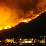 Akcija pošumljavanja izgorelog područja u Dalmaciji 6