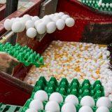Ministarstvo: Srbija ne uvozi jaja iz Holandije 10