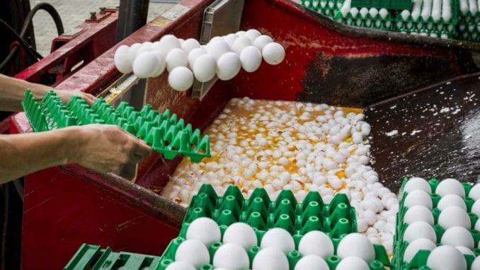 Ministarstvo: Srbija ne uvozi jaja iz Holandije 3