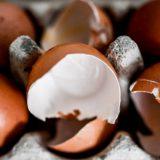 Kontaminirana jaja u 15 zemalja 6