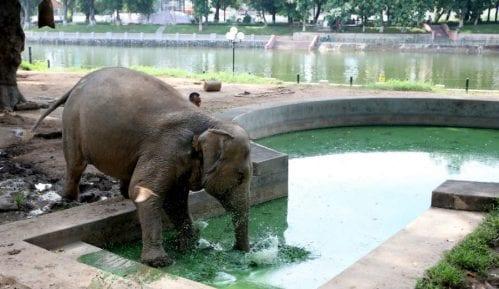 Danas se obeležava Svetski dan slonova 5