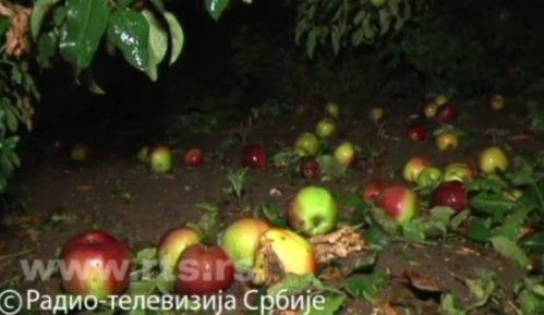 Grad opustošio voćnjake, opštine procenjuju štetu 15