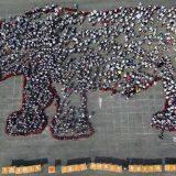 Svetski dan nosoroga 6