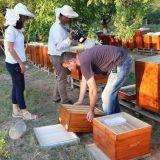 Zaprašivali ambroziju, potrovali pčele 3