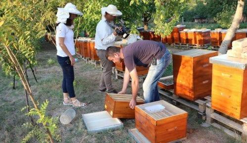 Zaprašivali ambroziju, potrovali pčele 6