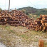Zbog ilegalne seče godišnje nestane hiljade hektara šuma 1