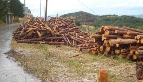 Zbog ilegalne seče godišnje nestane hiljade hektara šuma 8