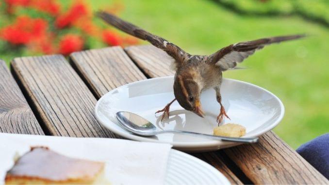 Šta se dešava sa telom kada preskačemo obroke? 1