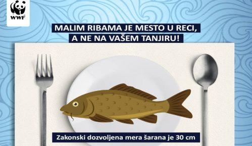 Ulov ribe na otvorenim vodama potencijalna opasnost po zdravlje 10