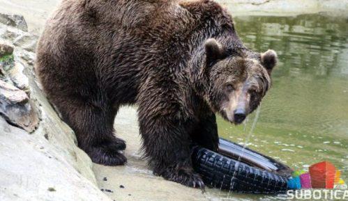 Medvedi na Paliću izašli iz jazbina; da li je kraj zime? 8