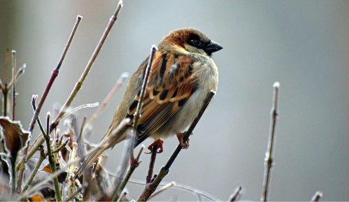 Populacija ptica u EU već nekoliko decenija u opadanju 11