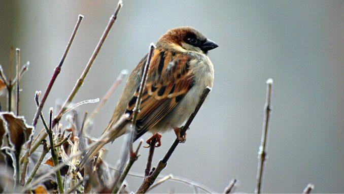 Populacija ptica u EU već nekoliko decenija u opadanju 3