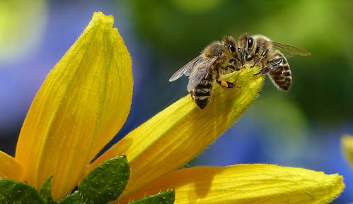 "Otvara se azil za pčele u pčelinjaku ""Košutnjak"" 7"