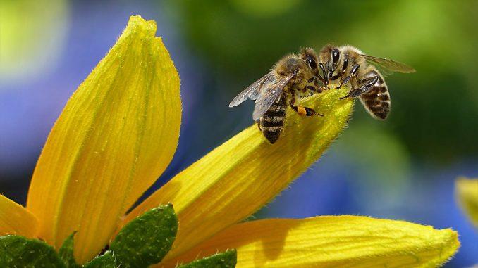 Kako izgleda biti pčela? 1