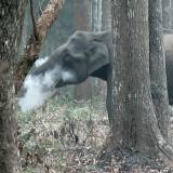 Slon koji puši zainteresovao naučnike 6