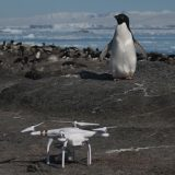 Ubrzano topljenje leda na Antartiku 13