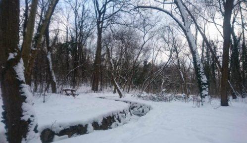 Bajfordova šuma: Prirodni raj u Beogradu 6