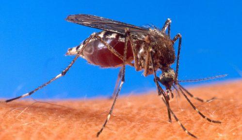 SZO: Moguće širenje denga groznice 14