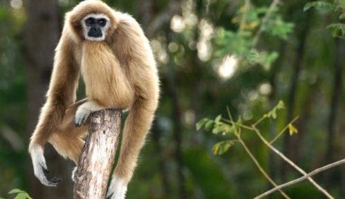 Misteriozna vrsta izumrlog majmuna pronađena u drevnoj kineskoj grobnici 9