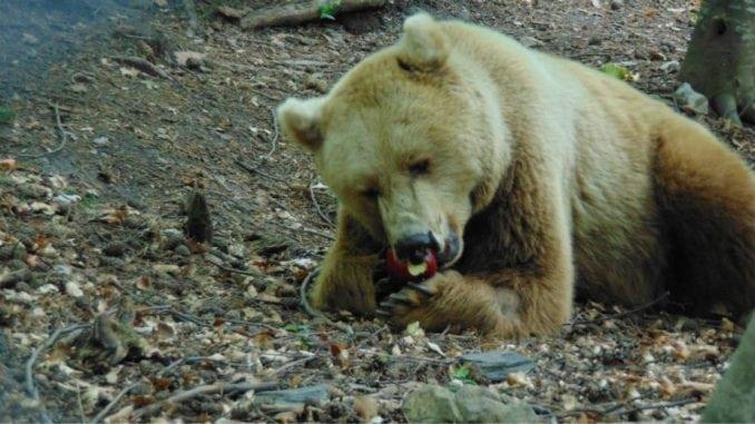 Bugarska: Mesta za povratak prirodi 1