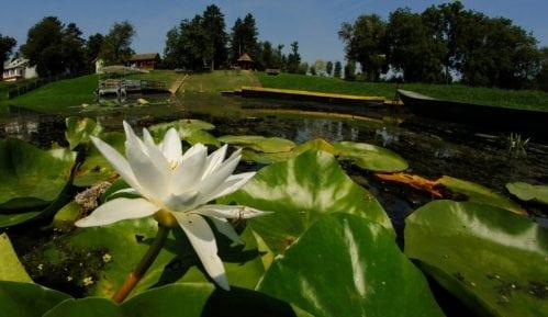 Šta je biodiverzitet - Bogatstvo, jednakost i različitost na planeti Zemlji 8