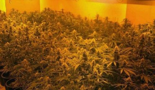 Otkrivene dve laboratorije za uzgoj marihuane 4