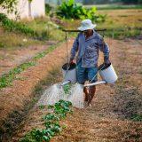 Mladi u EU izbegavaju poljoprivredne poslove 2
