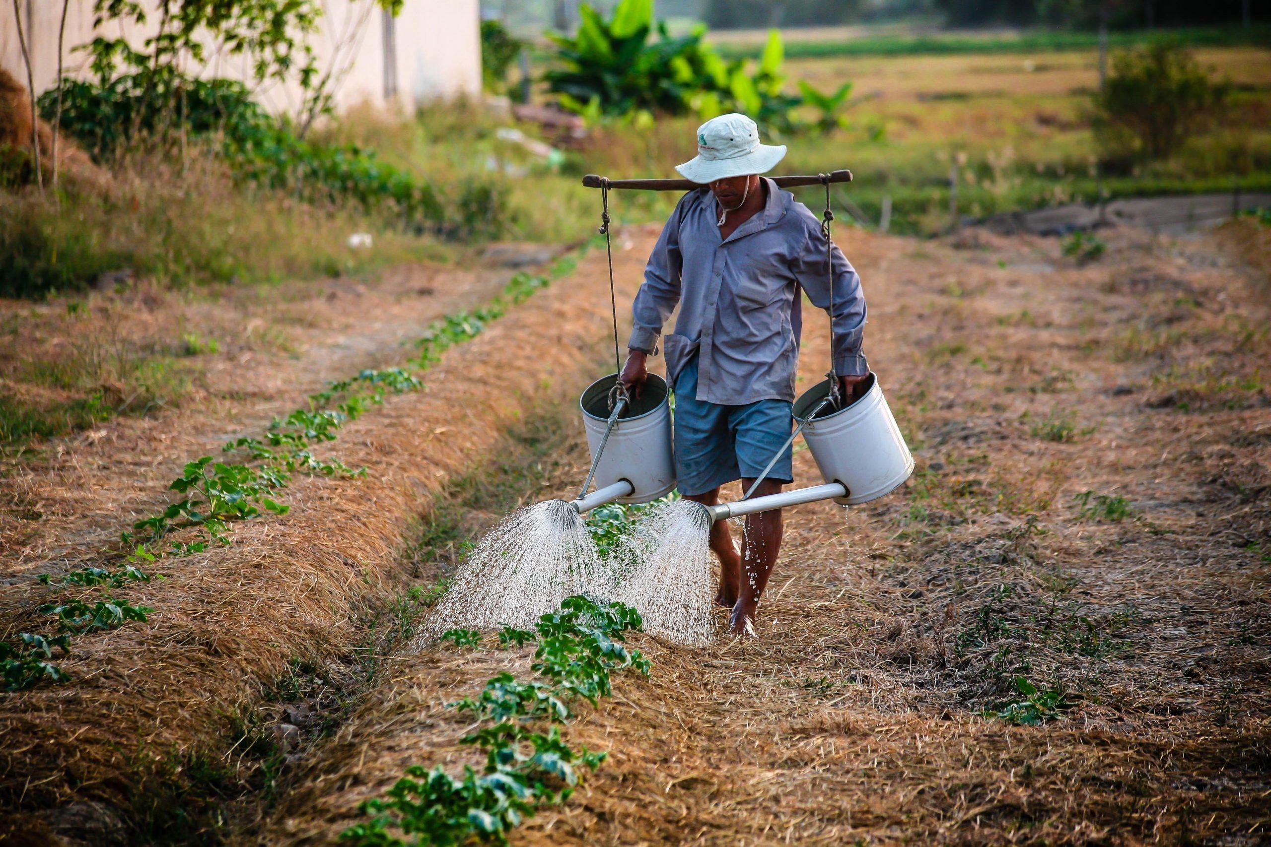 Mladi u EU izbegavaju poljoprivredne poslove 1