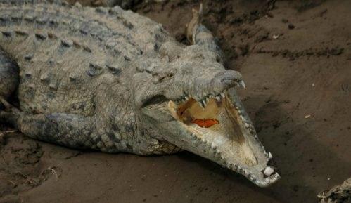 Uhvaćen krokodil od 600 kilograma 13
