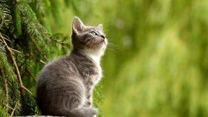 Hirurško uklanjanje kandži kod mačaka: Surovo ili opravdano? 4