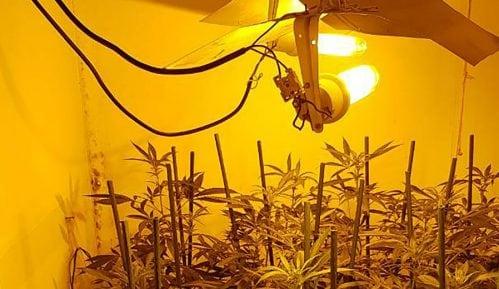 MUP: Pronađena laboratorija za uzgajanje marihuane 3